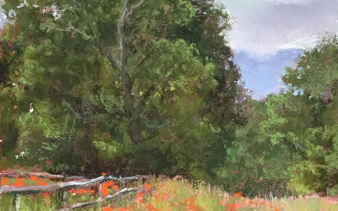 Old growth trees behind a field of orange poppies in the foothills of mountains Soft Pastel by Elizabeth Rhoades