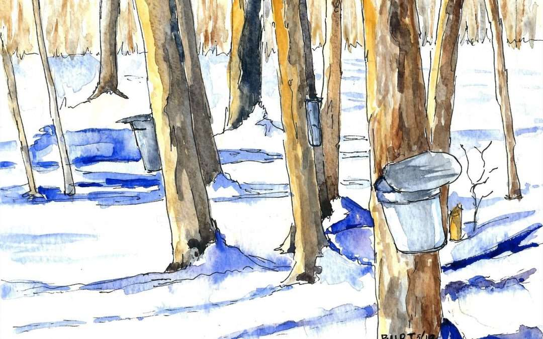 Sugaring at Brooksvale, March 2019 Watercolor And Ink by Brenda Burt